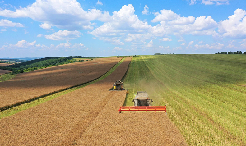 OPERATIONAL EXCELLENCE TO PRODUCE HIGH-QUALITY SEEDS