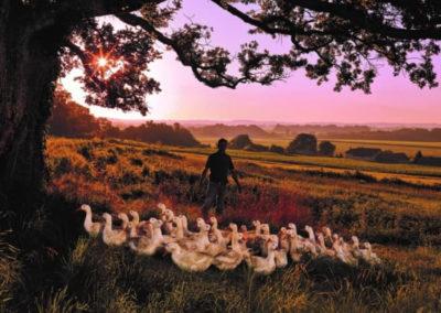 Groupe Euralis - Coopérative agricole et agroalimentaire - éleveur