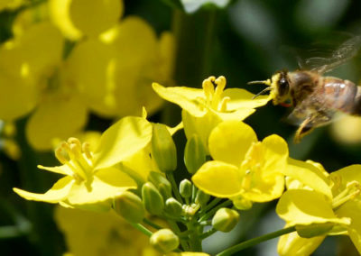 Groupe Euralis - Coopérative agricole et agroalimentaire - Lidea