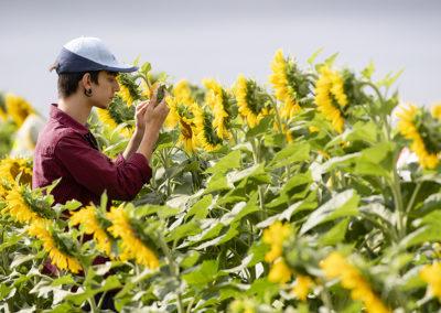 Groupe Euralis - Coopérative Agricole et agroalimentaire - Semences