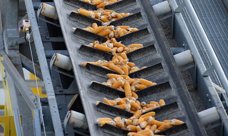 La performance industrielle pour des semences de qualité