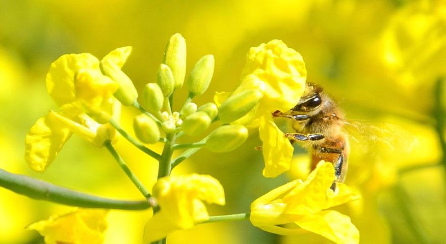Euralis, stop aux idées reçues - L'agriculture biologique