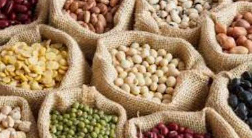 Lidea et TOP Semence, principaux acteurs en recherche de création variétale en production de semences et de mise sur le marché de légumes secs, regroupent leurs activités de création variétale au sein d'une même société. Celle-ci aura pour objet la création de nouvelles variétés de pois chiche, lentille et haricot sec.