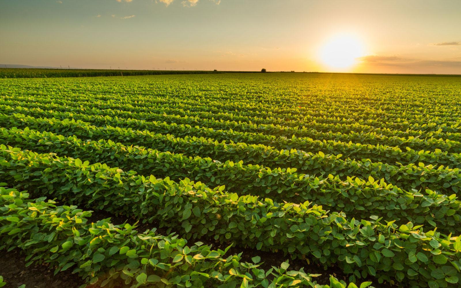 Euralis, partenariats pour les légumes