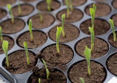 Euralis group - Seeds activities